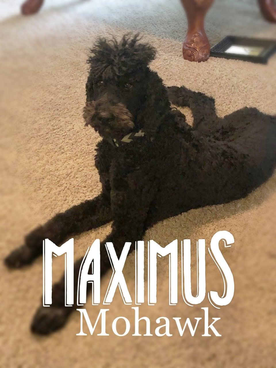 PWG_Maximus