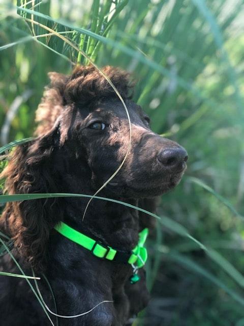 tiny puppy baby