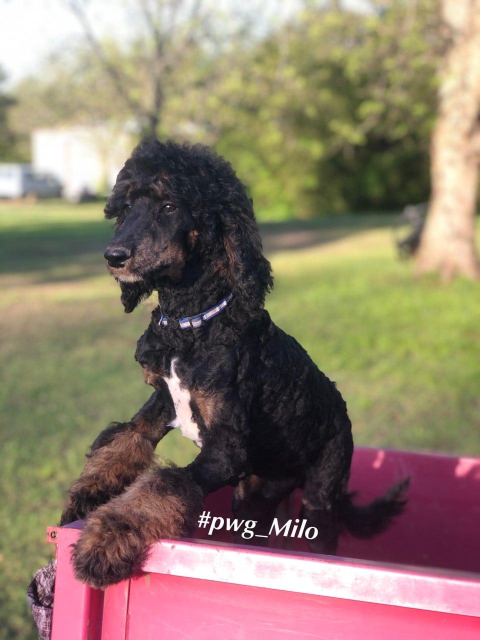 milo on duty