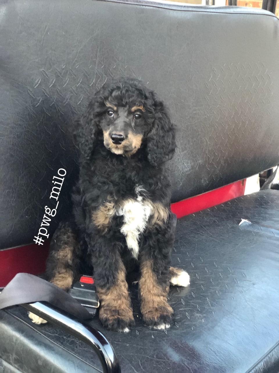 new puppy Milo