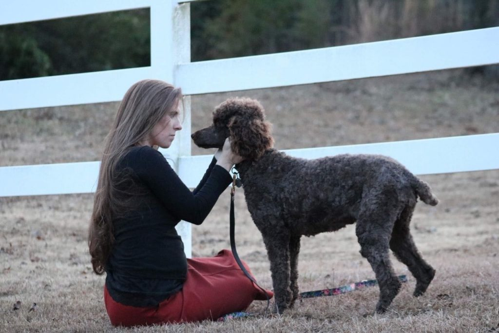 The Characteristics of a Standard Poodle